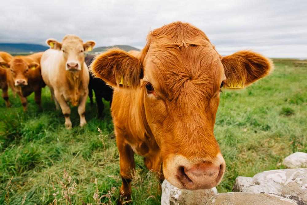 Carne Irlandesa